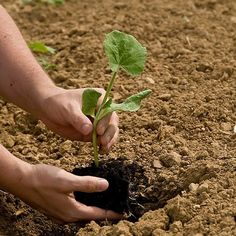 Free Planting by the Moon's Phase 2015 gardening calendar for Region 3 (northern U.S. states, Canada).