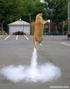 Honey! The cat got into the chilli!!!!