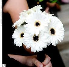 Dark eyed white gerbera bridesmaids bouquet