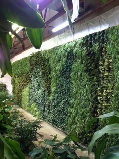 Living wall by Green Living Technologies International