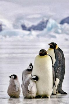 Penguin Family share moments