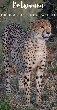 Botswana is one of the best countries in the world to see wildlife. This destination in Africa is the ultimate spot for ecotourism, and going on a Botswana safari is an incredible experience. This post highlights where to see animals in Botswana Cool Countries, Countries Of The World, Africa Destinations, Travel Destinations, African Safari, Africa Travel, Travel Inspiration, Travel Ideas, Travel Plan