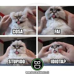 Quando al tuo gatto non piace essere toccato!