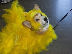 Her name was Lola, she was a showgirl... with yellow feathers in her hair and a dress cut down to there...