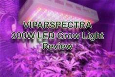 Full Spectrum Led Grow Lights Reviews (Highest Yielding Led