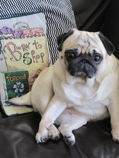 Pug slump executed to perfection!