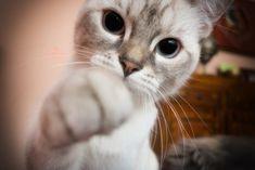 Deine Katze raubt dir den Schlaf? 7 Tipps gegen Katzenterror in der Nacht
