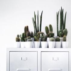 Ik ben eigenlijk mijn cactussen zat. Maar ze wegdoen kan ik nog niet over mijn hart verkrijgen. Dus heb ik ze vanuit het hele huis maar verzameld en op de kast gezet. Zo kan ik er in ieder geval weer even mee leven haha! #cactus #ikea #lijnm #locker #myhome #livingroom #styling #wonen #witwonen