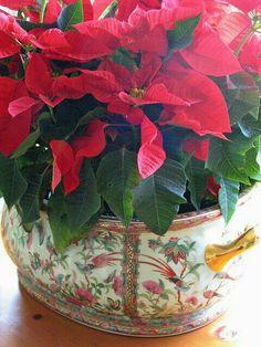 A Splendid Southern Christmas. Christmas Open House, Southern Christmas, Merry Christmas To All, Elegant Christmas, Green Christmas, Little Christmas, Christmas Colors, Beautiful Christmas, Christmas Home