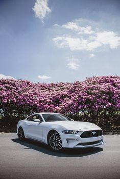 2019 Mustang Oxford White driving through West Virginia's beautiful Rhododendron groves. Luxury Sports Cars, Best Luxury Cars, Sport Cars, Autos Mercedes, Bmw Autos, Ford Mustang Car, Ford Gt, Gt Mustang, My Dream Car