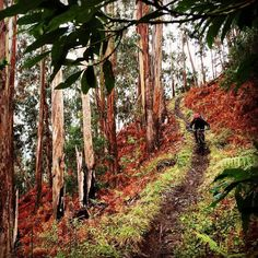 Mountain biking MTB bike Madeira, Portugal (fb)