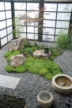 jardin zen: érable japonais, mousse, galets et roches