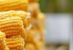 #News  Caixa anuncia oferta de R$ 6 bilhões para crédito rural