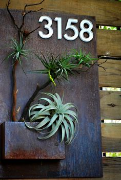 Tillandsias mounted on branches. Modernism Show 2013 - Potted Store, Los Angeles