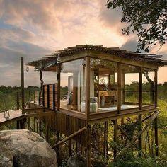 S.A. tree house