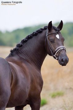 such a beautiful photo of a really fine horse