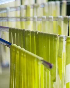 Lime and lemon verbena tagliolini - zesty colours to help me cling on to summer a bit longer. Lemon verbena is one of my absolute favourite herbs and the lemon flavour is possibly nicer than from a real lemon. And a plus side for me is I can much more easily grow verbena than a lemon tree! Happy Friday I hope you all have a great afternoon. . . #lemon #verbena #lime #pasta #freshpasta #pastafresca #tagliolini #tagliatelle #pappardelle #sfoglie #fattoamano #handmade #artisan #pastalove… Fresh Pasta, Verbena, Sugar And Spice, Happy Friday, Spices, Artisan, Lemon, Herbs, Colours