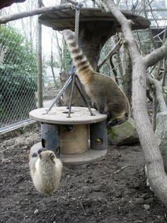 Dartmoor Zoo: Enrichment items wanted