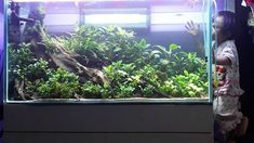Acuario3web (@acuario3web)   Twitter Aquarium Aquascape, Nature Aquarium, Aquascaping, Planted Aquarium, Tank I, Fish Tank, Plantar, Freshwater Aquarium, Scp