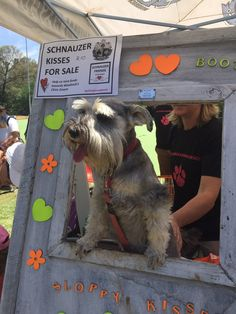 WOW! Thank you to everyone who visited the Woodrock Animal Rescue stand at the Ban Animal Trading Market today! Schnauzer Friends South Africa were supporting Woodrock and running a kissing booth. Gorgeous heart necklaces were sold by a Nadine and Lizzy as well as the Woodrock Animal Rescue 2016 calendar. Hannah Chetty's schnauzer biscuits were a hit! What an awesome day! So many smiles and happy kissers! The best kisses of the day were Rosie Chetty and Buzz Poerner! #woodrockclinicdream...