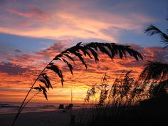 Image from http://images.fineartamerica.com/images-medium-large/sanibel-island-sunset-nick-flavin.jpg.
