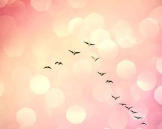 The Wonders of God's Nature: Geese in flight / Dr Margaret Aranda / Twitter…
