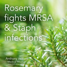 Rosemary fights MRSA & Staph infections