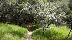 Weekend hike: Go now to savor Malibu Creek's wildflowers, rock pools  Spring hiking in Malibu Creek State Park offers two things in short supply in California: an abundance of wildflowers and flowing water.  http://www.latimes.com/travel/california/la-trb-malibu-creek-weekend-hike-20150409-story.html