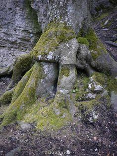 Ehemalige Wohnhöhle im Ulrichstein (Fränkische Schweiz)
