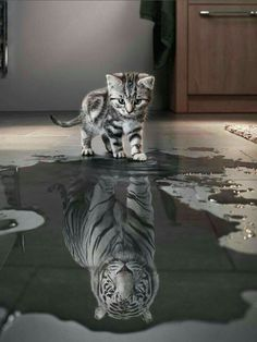 Mirrors reflect the true soul...thinhs mat be larger than they appear