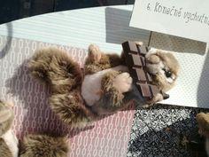 Marmotta e cioccolato!!