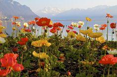 Montreux, Lake Geneva, Swiss Alps