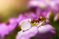 La fourmi et sa goutte d'eau