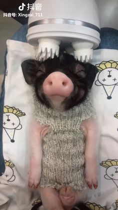 Click Visit To Watch More Videos Source: Tiktok Thank You! … – Chris Brothers – Gina gini Click Visit To Watch More Videos Source: Tiktok Thank You! … – Chris Brothers Click Visit To Watch More Videos Source: Tiktok Thank You! So Cute Baby, Cute Baby Pigs, Cute Piglets, Cute Babies, Baby Piglets, Mini Piglets, Cute Little Animals, Cute Funny Animals, Little Pigs