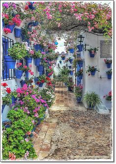 One of the many beautiful courtyards and alley in Cordoba ... we took a train to Cordoba from Madrid.  We loved Cordoba!
