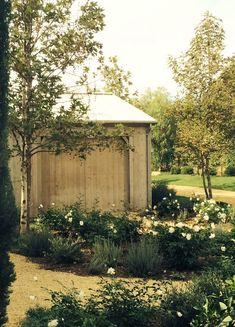 White floribunda rose, garden paths