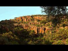 The amazing wildlife of South Australia.        #wildlife #australia #southaustralia #travel #animals #kangaroo #kangaroos #koala #koalas #dolphins