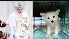 This is Kimi, a gorgeous white fox. He was just a baby when he was taken away from his family and put in a small, dirty cage in a fur farm in Finland. Months passed and Kimi was still confined to that tiny place, with no chance of escaping. His life was absolutely miserable. Then, one day the order...