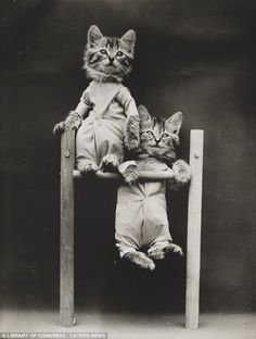 The Acrobats: Two kittens are pictured in a remarkable pose by Harry Whittier Frees, the U.S. photographer