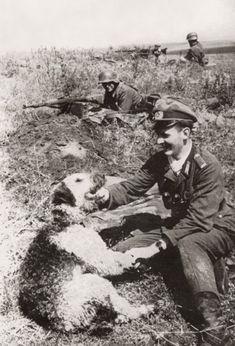 Airedale Terrier w Soldier WWll, 1943 War History, Airedale Foto, Ww2 Warriors, War Ll, War Animal, War Ii, Axi Wwii, Airedale Terrier, War Dogs .