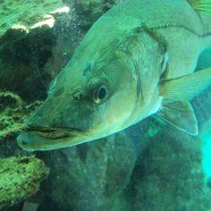 Oceanario 01 - Islas del Rosario #Colombia