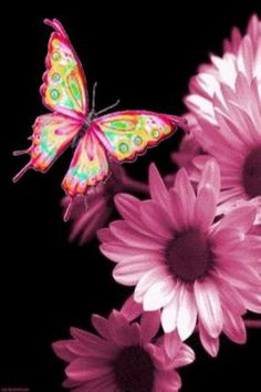 Butterfly and pink daisies
