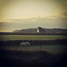 Typisch Texels landschap met schapenboetjes, dat is #ooktexel #texel