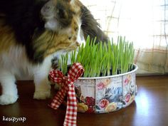 From old pan into grass pot for the cat. Tutorial is in Turkish. Turkish Van Cats, Decorative Planters, Grass, Pots, Upcycle, Recycling, Diy Crafts, Craft Ideas, Reading