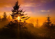 A beautiful sunset peeking through the trees in the Smoky Mountains
