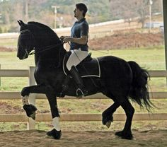 Warlander horse. Gorgeous fancy horse, prancing, I don't know if this is a dressage horse or what, but it's gait is beautiful.