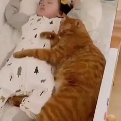 Funny Cute Cats, Cute Cats And Kittens, Cute Funny Animals, Baby Cats, Cute Dogs, Cute Babies, Kitty Cats, Cute Animal Videos, Cute Little Animals