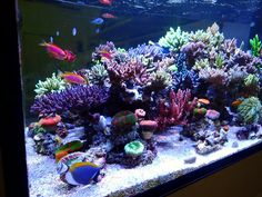 SPS lighting on a budget Coral Reef Aquarium, Saltwater Aquarium, Aquarium Fish Tank, Reef Tanks, Fish Tanks, Nice Things, Old Things, Coral Lamp, Pet Fish