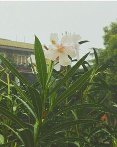 after the rain..🌸🌷 #flowers #aftertherain #rain #nature