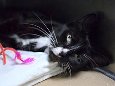 STELLA - A1086182 - - Brooklyn   ***TO BE DESTROYED 09/15/16*** SECOND CHANCE!! STELLA BROUGHT TO SHELTER BY FINDER WHO STATED THAT SHE'S BEEN AROUND HER NECK OF THE WOODS FOR A WHOLE YEAR! So why is it just now this Finder brought the 5 year old to a HIGH KILL SHELTER? She was said to be friendly around people, got along with the Finder's dog and even under such circumstances, poor STELLA earned an AVERAGE RATING! STELLA has some lingual ulcers which are treata